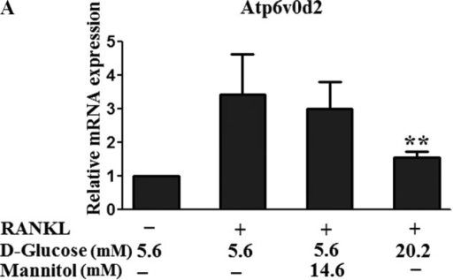 Effect of high glucose on the mRNA expression levels of ATP6v0d2 and DC-STAMP. RAW264.7 cells were seeded at a density of 1×105 cells/well in 6-well plates cultured with RANKL and different doses of D-glucose (5.6 and 20.2 mM) or mannitol for 5 days. The mRNA expression levels of (A) ATP6v0d2 and (B) DC-STAMP were analyzed using reverse transcription-quantitative polymerase chain reaction. Data are expressed as the mean ± standard deviation of the quantification of target expression relative to the untreated group following normalization against the expression of β-actin (2−ΔΔCt method). The untreated group were defined as the standard (=1). **P<0.01, vs. 5.6 mM glucose-treated cells. Atp6v0d2, v-ATPase V0 subunit d2; DC-STAMP, dendritic cell-specific transmembrane protein; RANKL, receptor activator of nuclear factor-κB ligand.
