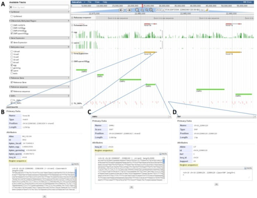 Screenshots of the methylome browser in MethBank. (A) Overview of the methylome browser that corresponds to two zebrafish developmental-associated hoxa genes, showing methylation levels, gene expression profiles, DMRs and SNPs. (B) Detailed gene expression information for hoxa13b. (C) Detailed DMR information for hoxa13b. (D) Detailed SNP information for hoxa13b.