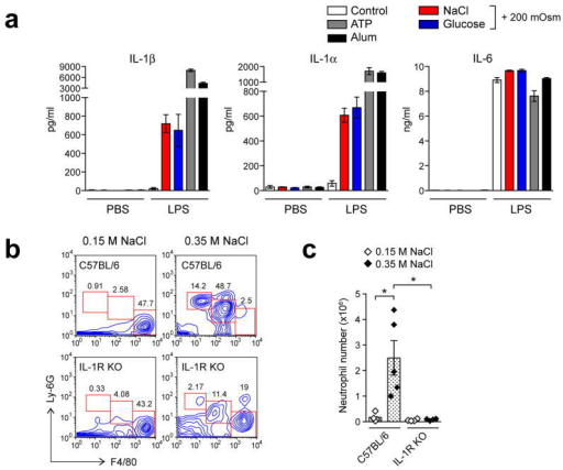 "Hyperosmotic stress induces IL-1β secretion in macrophages (a) BMDMs primed without (PBS) or with LPS were incubated overnight in isotonic conditions (control) or hyperosmotic conditions (+ 200 mOsm) by adding NaCl, glucose, or sorbitol, or stimulated with ATP (5 mM) or alum (250 μg/ml) for 2 h or 6 h respectively. IL-1β, IL-1α and IL-6 in media supernatants were measured by ELISA. (b, c) Wild-type (C57BL/6) or IL-1R-deficient mice (IL-1R KO) were injected peritoneally with 0.15 M (""isotonic"") or 0.35 M (""hypertonic"") of NaCl (each group, n = 4). Peritoneal lavage cells were analyzed for neutrophils after 16 h. Contour plots of FACS analysis show the percentages of neutrophils (Ly-6G+, F4/80 negative), inflammatory monocytes (Ly-6G+, F4/80+low), and resident macrophages (Ly-6G negative, F4/80+high) cells (b). Neutrophil numbers were determined by using cell-counting beads as described in the Methods (c). Data are representative of three (a, b) independent experiments. Data indicate mean ± s.d. of quadruplicates (a), or for pooled groups of mice from three experiments (c). Student's t test: *, P ≤ 0.05."
