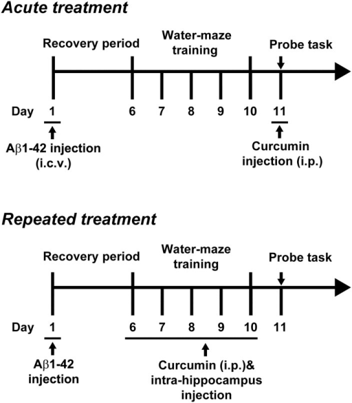 The experimental protocol of the Morris water maze for acute or repeated curcumin treatment.