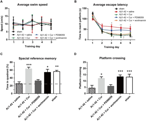 Effect of intra-hippocampal injections of ERK inhibitor or GSK3 activator on spatial learning function in the rat model of Alzheimer's disease.The ERK inhibitor PD98059 (20 μM) or GSK3 activator wortmannin (100 μM) (combined with chronic curcumin i.p. injection) was injected bilaterally into the hippocampus 30 min before the water-maze training trial. (A) Swim speed in each training trial. (B) The escape latency during the water maze training trials. (C) The time spent in the target quadrant and (D) the number of times crossing the platform in the probe task. n = 8/group. For panel B, *P < 0.05, **P < 0.01, Aβ1–42 + saline vs. sham control group; # P < 0.05, Aβ1–42 + Cur vs. Aβ1–42 + saline group; ^ P < 0.05, Aβ1–42 + Cur + wortmannin vs. Aβ1–42 + saline group. For other panels, * P < 0.05, ** P < 0.01, *** P < 0.0001 compared with Aβ1–42 + saline.