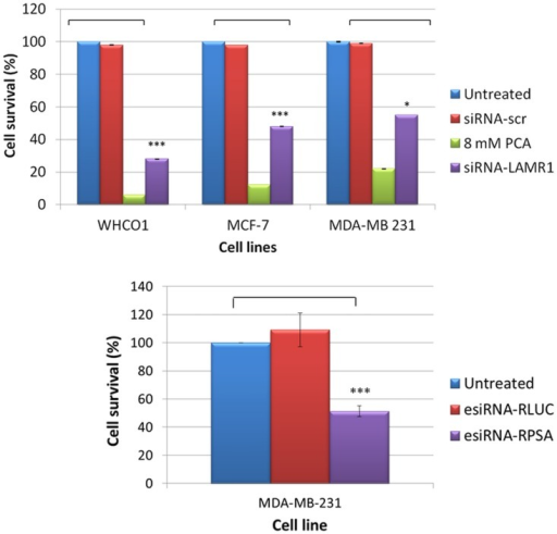 The effect of siRNA-mediated downregulation of LRP expression on the cellular viability of WHCO1, MCF-7 and MDA-MB 231 cells.The viability of WHCO1, MCF-7 and MDA-MB 231 cells was analysed 72 h post-transfection using an MTT assay. siRNA-LAMR1 treated WHCO1, MCF-7 and MDA-MB 231 as well as esiRNA-RPSA treated MDA-MB 231 cells revealed a significant reduction in cellular viability compared to untreated cells set to 100%. 8mM PCA and siRNA-scr were used as positive and negative controls, respectively. The error bars represent the standard deviation (n = 3) and a significant difference (* p < 0.05, ** p < 0.01, *** p <0.001) between the untreated control and the treated samples is indicated by an asterisk.