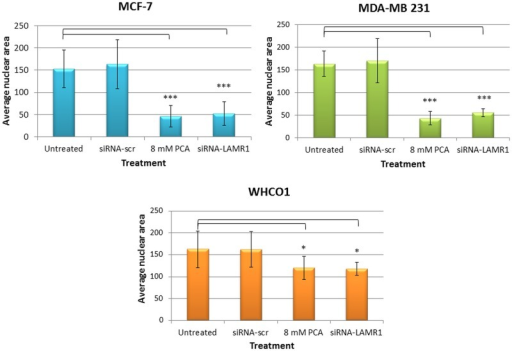 Changes in nuclear area after siRNA-mediated downregulation of LRP.72 h post-transfection, MCF-7, MDA-MB 231 and WHCO1 cells were stained with Hoescht 33324 and viewed by immunofluorescence microscopy. The change in nuclear morphology was quantified with ImageJ software and is represented as the average nuclear area. The error bars indicate the standard deviation and a significant difference (* p < 0.05, ** p < 0.01, *** p <0.001) between the untreated control and the treated samples is shown by an asterisk.