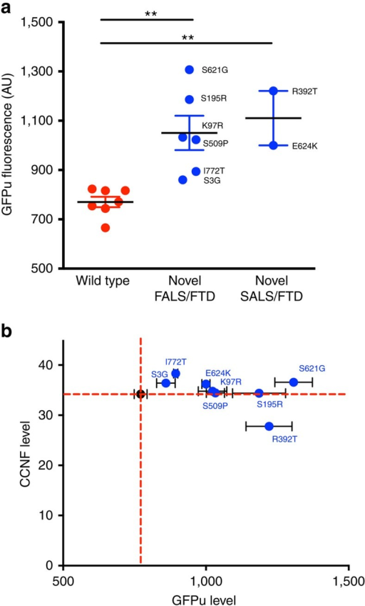 Mutant cyclin F impairs ubiquitin-mediated proteasomal degradation.NSC-34 cells were co-transfected with GFPu and either wild type or mutant cyclin F, tagged with mCherry. GFPu fluorescence intensity was analysed by flow cytometry 48 h post transfection. (a) Plot of GFPu fluorescence intensity following flow cytometry. A significantly higher level of GFPu fluorescence was observed in cells expressing novel cyclin F mutations (blue data points) when compared with those expressing wt CCNF (red data points) WT v FALS/FTD P=0.0017, d.f.=11; WT v SALS/FTD P=0.001, d.f.=7; two-tailed unpaired Student's t-test). (b) The higher level of GFPu fluorescence was independent of the level of cyclin F as quantified using mCherry signal—R-squared=0.13. Red dashed lines represent the WT mean. Data are represented as mean,±s.e.m. n=3 (n is one experiment consisting of the mean of 50,000 cells); **P<0.01. d.f., degrees of freedom.