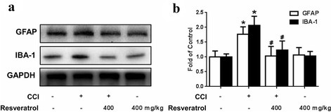Resveratrol inhibits the activation of microglia and astrocytes in rat STN. a, b Representative western blot bands and a data summary (n = 4 each group) of the expression of GFAP and IBA-1, which are markers of astrocytes and microglia, respectively. GFAP and IBA-1 expression were enhanced in the STN of the CCI rats, whereas resveratrol (400 mg/kg, p.o.) downregulated the expression of both markers. *P < 0.05 and **P < 0.01 versus control; and #P < 0.05 and ##P < 0.01 versus the CCI group