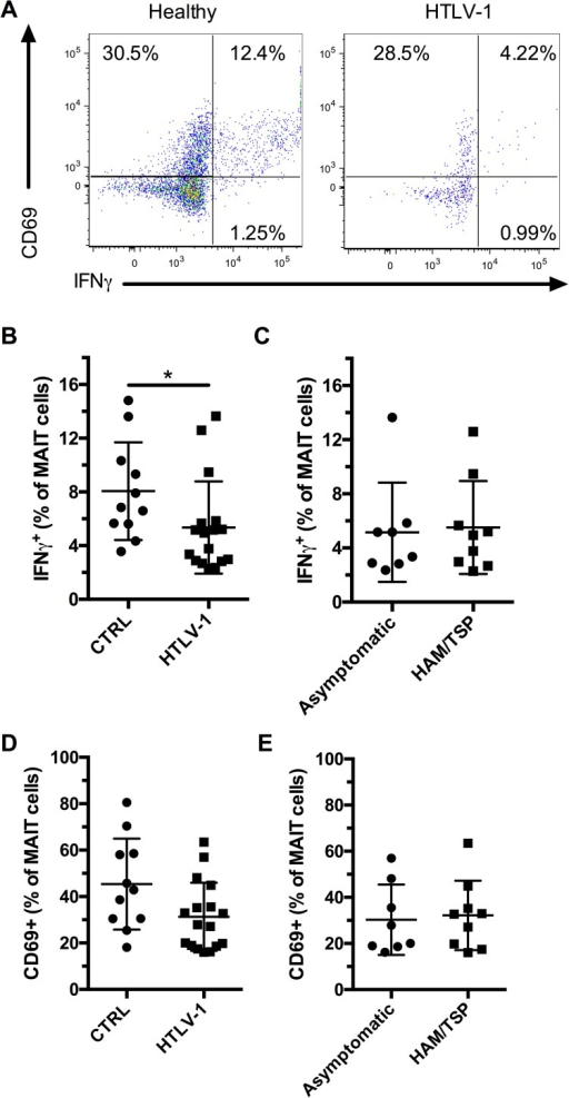 MAIT cells are functionally impaired in HTLV-1 infection.PBMCs were stimulated with E. coli for 24h at a MOI of 10 and Monensin was added during the last 6 hours before staining for surface antigens and intracellular staining for IFNγ. Representative flow plots of CD69 expression and IFNγ production by MAIT cells (CD3+ Vα7.2+ CD161+) from healthy controls and HTLV-1-infected individuals (A). Production of IFNγ by MAIT cells in healthy controls (n = 11) and HTLV-1-infected subjects (n = 17) (B). Production of IFNγ by MAIT cells in asymptomatic (n = 8), and HAM/TSP (n = 9) HTLV-1-infected subjects (C). CD69 expression by MAIT cells in healthy controls and HTLV-1-infected subjects (D). CD69 expression by MAIT cells in asymptomatic, and HAM/TSP HTLV-1-infected subjects (E). * indicates p ≤ 0.05 and ** indicates p < 0.01. The lines and whiskers represent the median and interquartile range respectively.