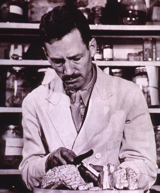 <p>Half-length, front pose, standing in laboratory, sectioning brain tissue of German war criminal; specimen jars on shelves in background.</p>