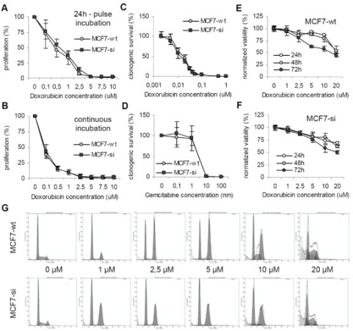Evaluation of the chemosensitivity of wild type and PP2Cα siRNA-expressing MCF7 cells. A and B: Effect of different doses of doxorubicin on the proliferation of MCF7-wt and MCF7-si cells. The cells were either exposed to the drug for 24 h (A) or continuously (B). Values represent average ± SD (n = 3). C: Effect of doxorubicin on the clonogenicity of MCF7-wt and MCF7-si cells. Values represent average ± SD (n = 3). D: Effect of gemcitabine on the clonogenicity of MCF7-wt and MCF7-si cells. Values represent average ± SD (n = 3). E and F: Quantification of the effect of doxorubicin on the viability (i.e. the membrane integrity) of MCF7-wt and MCF7-si cells. The viability was determined by means of FACS analysis. Values represent average ± SD (n = 3). G: Representative images of the cell cycle distribution of MCF7-wt and MCF7-si cells after 48 h of doxorubicin treatment.