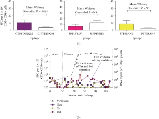 Viral Evolution in an Animal with Known Protective Mamu Alleles. (a) Comparison of IFN-γ ELISPOT values for the vaccinated, Mamu A*01+ NP animal 16040 before or after the Mamu A*01-restricted Gag CTPYDINQM to CIPYDINQM, Tat STPESANL to PTPESANP, and Pol STPPLVRLV to SSPPLVRLV mutations. Statistical analysis was performed using the Mann Whitney test. (b) NASBA viral loads and IFN-γ ELISPOT results for all three epitopes were plotted to determine the effects of mutations on the control of viral replication.
