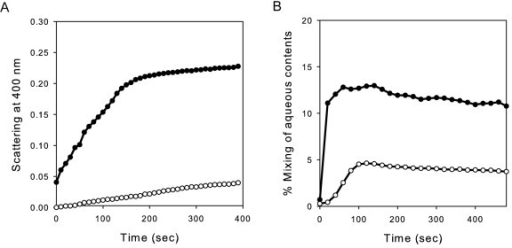 In vitro liposome aggregation and fusion induced by YqiC. (A) Time course of DPPC/DPPA SUV aggregation monitored by light scattering and (B) time course of aqueous content mixing was measured after addition of YqiC protein. Equimolar amounts of terbium (Tb)- and dipicolinic acid (DPA)-loaded SUV were premixed in 10 mM Tris-HCl (pH 8.0), 50 mM NaCl, and 1 mM EDTA. The fluorescence of the Tb(DPA)3 complex formed after the mixing of aqueous contents by protein addition was measured at 545 nm over incubation time. The measurements were taken in 50 mM Tris-HCl buffer (pH 8.0) (open circles) or 50 mM sodium acetate buffer (pH 4.0) (close circles) at 25°C. The liposomes were composed of DPPC and DPPA in a molar ratio of 75:25. The lipid:protein molar ratio was 100: 1. The data presented are the results of a representative experiment of three independent repetitions.