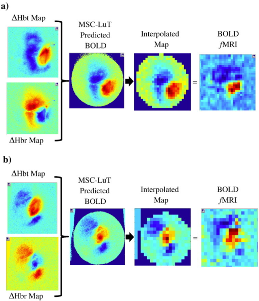 Spatial predictions of BOLD from underlying haemodynamics for 2 representative animals. Spatial maps of changes in HbT and Hbr are input into a Monte Carlo simulation of MR signal attenuation to predict the BOLD signal. The resulting BOLD prediction is subsampled so it can be directly compared to the concurrent fMRI data.