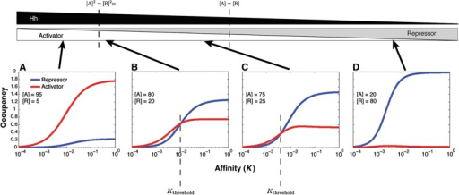 Repressor and activator occupancy curves demonstrate why repressors out-compete activators at high-affinity sites but not at low-affinity sites. Occupancy (y axis) of activator (red) and repressor (blue) shown as a function of the association constant, K (x axis), for a single position within the gradient (fixed [A] and [R]). [A] and [R] in the gradient range between 1 and 100, in arbitrary units, and cooperativity ω is fixed at 30. (A) At high levels of activator, activator occupancy always exceeds repressor occupancy, and all genes are activated regardless of enhancer affinity. (B, C) Within the intermediate zone of the gradient, repressor and activator occupancy curves intersect, due to the inherent steepness of the cooperative repressor binding curve. The curves intersect at a threshold affinity Kthreshold. Higher affinity enhancers (larger K) have higher repressor occupancy and are repressed, while lower affinity enhancers have higher activator occupancy and are activated. (D) When [R]>[A], repressor occupancy always exceeds activator occupancy, and all genes are repressed regardless of enhancer affinity. These results hold for enhancers with more than two sites (Supplementary Figure 1).