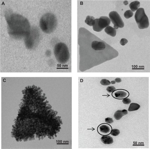 Characterization of nanoparticles synthesized by PZRE using transmission electron microscopy. (A) Spherical silver nanospheres; (B) shape evolution of gold nanotriangles; (C) assembly of gold nanospheres forming a gold nanotriangle; (D) arrows indicating blunt-ended AgAu nanopolygons.Abbreviation: PZRE, Plumbago zeylanica root extract.
