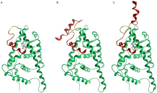 Low-mode molecular dynamics simulations.Superposition of the starting conformation (helix 12) and the most energetically favoured open conformations for the agonist-bound LBD (A), the apo LBD (B), and the antagonist-bound LBD (C).