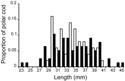 Length comparison of polar cod (Boreogadus saida) measured by two different methods.The dark column bars indicate measurements from the Deep Vision data (n = 77, mean  = 34 mm), while the catch data measurements are indicated by white column bars (n = 50, mean  = 34 mm).