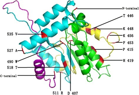Model building of the three-dimensional structure of the GRAS protein. The VHIID, LHRII, PFYRE, and SAW motifs are presented in green, yellow, blue, and pink, respectively. The figure was produced using the CPHmodels program, and amino acids refer to the AT3G54220 sequence.