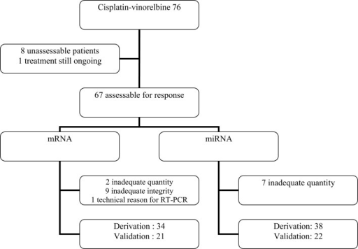 Flow chart of the patients treated with cisplatin–vinorelbine for transcriptomic analysis.