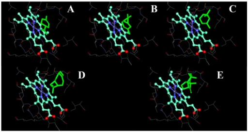 The binding pocket of CYP51F1 with terpenoid molecules. The terpenoid molecules limonene (A); carene (B); pinene (C); β-caryophyllene (D) and longifolene (E) are drawn as a green stick representation. The heme-porphyrin is drawn as a ball and stick representation with carbon atoms in cyan.