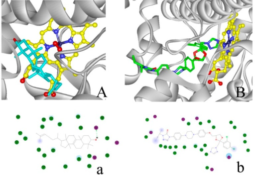 Lanosterol and itraconazole (ITC) binding in CYP51F1. (A) Lanosterol is depicted with carbon atoms colored cyan and heme with carbon atoms colored yellow. Selected oxygen atoms are colored red; nitrogen is blue; and iron is stone blue; (B) ITC is depicted with carbon atoms colored green, and other atoms are colored as in (A). A 2D diagram of the interaction between the protein and ligands is shown below: (a) lanosterol and (b) ITC. Purple dot: amino acids for a hydrogen bond, static electricity and polarity interactions. Green dot: amino acids for VDW (Van der Waals) interactions. Blue shadow: solvent around the amino acids and atoms. Green arrow: electron donor for a hydrogen bond.