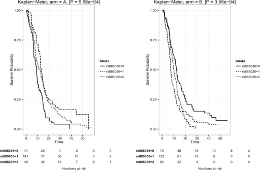 Kaplan-Meyer survival curves according to rs885036 genotype.A. Survival curves for patients in arm A, treated with CAPOX-B in first-line chemotherapy. B. Survival curves for patients in arm B, treated with CAPOX-B plus cetuximab in first-line chemotherapy.