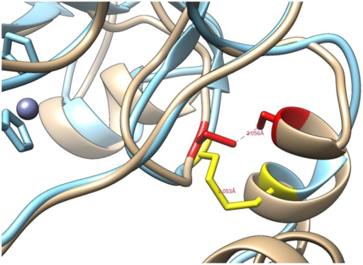 Preliminary model of human CARP X.The model showing a disulfide bridge between conserved cysteines C60 and C223 (marked in red).