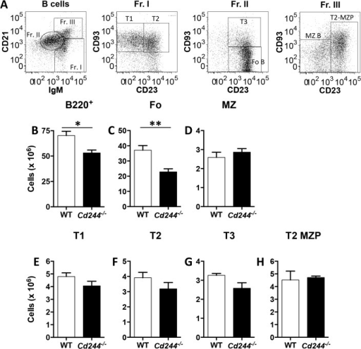 Total B cell numbers are reduced in the spleen of Cd244-/- mice due to a reduction in Fo B cells.A representative splenic B cell gating strategy is shown (A). The absolute number of B cells (B220+) (B) and that of the Fo (B220+IgMintCD21intCD23+CD93-) (C), MZ (B220+IgMhiCD21hiCD23-) (D), T1 (B220+IgMhiCD21loCD23-CD93+) (E), T2 (B220+IgMhiCD21loCD23+CD93+) (F), T3 (B220+IgMintCD21intCD23+CD93+) (G) and T2-MZP (B220+IgMhiCD21hiCD23+) (H) B cell subsets in the spleen of WT and Cd244-/- mice was determined by flow cytometry. Data are shown as the mean ± SE of four mice. *p<0.05; **p<0.01.
