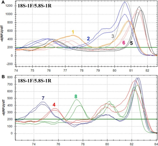 Melting profiles for amplicons targeting ITS-1 using primer set 18S-1F/5.8S-1R. Each profile tracing represents the result from an individual strain of the following tested species: in panel (A), 1. C. parapsilosis (2), 2. C. tropicalis (2), 3. C. guilliermondii (1), 5. C. dubliniensis (2), and 6. C. albicans (2); in panel (B), 4. C. glabrata (2), 7. C. lusitaniae (2), and 8. C. krusei (2). The number in the parenthesis after the species name indicates the number of strains examined in the study.