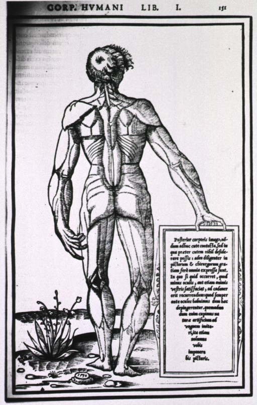 <p>Rear view of a male figure, standing full length; muscles of the body are defined through shading, no further identification is provided.</p>