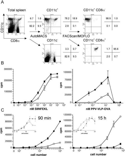 Differential kinetics of in vivo PPV-VLPs-OVA presentation by CD8α− and CD8α+ DCs. (A) Purification of CD8α− and CD8α+ CD11c+ spleen cells. Spleens from C57BL/6 mice were removed and after collagenase/DNase I digestion, cells were stained with MACS beads–anti-CD11c, PE–anti-CD11c, and FITC–anti-CD8α antibodies and passed through an AutoMACS and then immediately through a FACScan™ or MOFLO®. The percentages of the different cell populations obtained after each step of purification are indicated and correspond to naive mice. (B) In vitro antigen presentation assays. Spleen CD8α− (•) and CD8α+ (○) CD11c+ cells were incubated in vitro with OVA257–264 peptide (left) or PPV-VLPs-OVA (right) for 4 h. They were then washed and cultured overnight with 105 B3Z cells/well. (C) Ex vivo PPV-VLPs-OVA presentation assays. Mice were intravenously injected with 50 μg PPV-VLPs-OVA at 90 min (left) or 15 h (right) before DC purification. CD8α− (•) and CD8α+ (○) CD11c+ cells as well as CD11c− (⋄) spleen cells were purified and cultured overnight with 105 B3Z cells/well. In the insets, CD8α− (•) and CD8α+ (○) CD11c+ cells purified from PPV-VLPs-OVA–injected mice were cultured overnight with 105 B3Z cells/well in the presence of 10−1 nM OVA257–264 peptide. The presentation of the SIINFEKL peptide to B3Z cells was monitored by IL-2 production, measured by a CTLL proliferation assay, and expressed as mean ± SEM counts per minute (cpm) of duplicate wells. One representative experiment out of two (for B) or seven (for C) is depicted (three to five pooled mice per group).