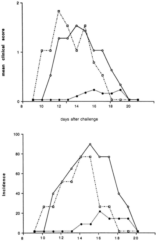 Effect of the KLH preimmunization and challenge at the  time of EAE induction on the incidence and clinical score of the disease.  Two groups of SJL/J mice were injected intraperitoneally with an emulsion of KLH in IFA. One control group was injected with PBS. After  4 wk, EAE was induced by immunizing the animals with guinea pig myelin in CFA. One of the two groups of mice pretreated with KLH received the foreign antigen with the encephalitogenic inoculum. This group  of mice was almost completely protected (filled circles) against EAE. The  control group that was not preimmunized with KLH (open circles) or the  group that was primed, but not challenged a second time with KLH (open  squares) both showed high incidences and clinical scores for the disease.