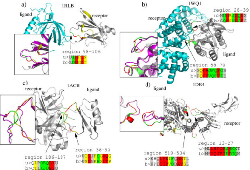 Examples of local structural changes induced by protein-protein binding. Proteins are colored according to the rmsddev of the letter substitution unbound/bound form, using same color scheme as in Figure 5: white = local rmsd lower than 0.2Å, gray = local rmsd between 0.2 and 0.5 Å, yellow = local rmsd between 0.5 and 1 Å, green = local rmsd between 1 and 1.5 Å, red = local rmsd greater than 1.5 Å. The superimposition of bound and unbound structures (in magenta), is shown for the modified region. The structural encoding are shown for the interface region that are modified: > u: unbound encoding, > b: bound encoding.