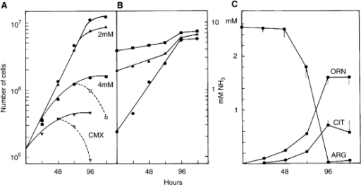 Comparison of the cytotoxicity of ammonium-supplemented media with conditioned medium from irradiated cells. Cells were grown in fresh culture medium provided with none (closed circles), respectively 2 and 4 mM NH4Cl or in CMX (8 Gy, 50 000 cells, 96 h). Dashed lines show the surviving cells with the cloning efficiency included (A). Parallel to cell countings, the concentrations of ammonia were determined in the culture media (B) as well as those of arginine, ornithine and citrulline (C). Vertical bars represent the maximum deviation in the ornithine cycle composition for the 2 and 4 mM NH4Cl media with respect to the control.