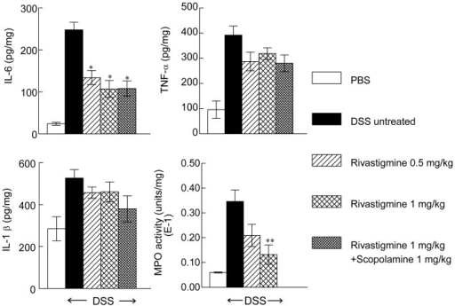 Effect of rivastigmine on cytokines and MPO activity in colon of mice with DSS-induced colitis.PBS = phosphate buffered saline. DSS = dextran sodium sulphate. Data are mean ± SEM, Significantly different from mice treated with PBS and drinking DSS *p<0.05, **p<0.01.