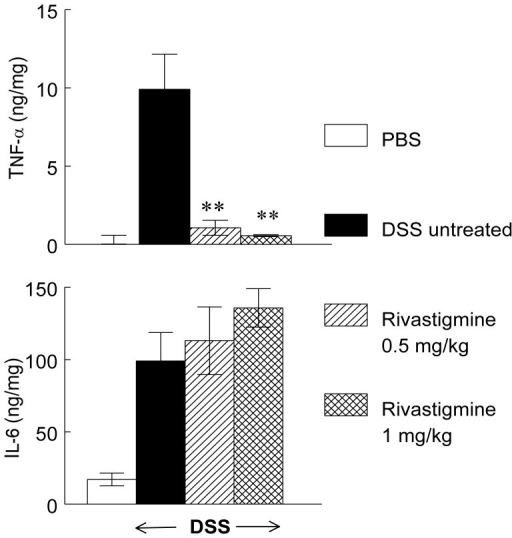 Effect of rivastigmine on TNF-α and IL-6 released from peritoneal macrophages of DSS treated mice.Legend as in Figure 3. Data are mean ± SEM and represent pooled data from 6 animals per group. Significantly different from mice with DSS-induced colitis treated with PBS, ** p<0.01.