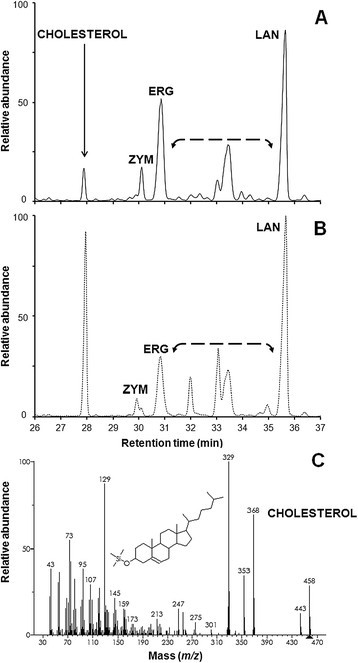 Cholesterol assimilation experiments. Overlay of GC-MS sterol chromatograms for A) turbo yeast (unbroken trace) and B) MYA-796 (broken trace) grown on glcYM+chol. The diagnostic fragmentation spectrum for cholesterol is shown (C). Note the increased abundance of minor sterol intermediates (bracketed arrow) relative to cultures grown on GJ + tfosEp and YPD media.