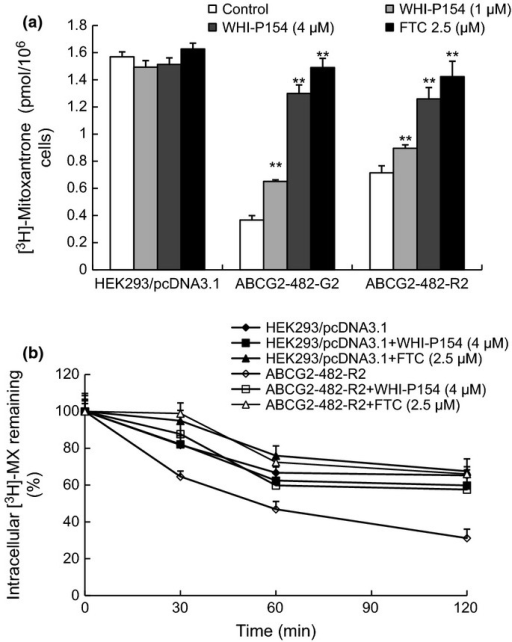"Effect of WHI-P154 on the accumulation and efflux of [3H]-MX. The accumulation of [3H]-MX was determined in both wild-type and mutant ABCG2-overexpressing ABCG2-482-R2 and ABCG2-482-G2 cells with or without WHI-P154. Columns are the mean of triplicate determinations; bars represent SD (a). *P < 0.05, **P < 0.01 versus the control group. The effects of WHI-P154 on the efflux of [3H]-MX from HEK293/pcDNA3.1 and ABCG2-482-R2 cells were measured as described in the ""Materials and Methods"" section (b). Data shown are means ± SD for independent determinations in triplicate."
