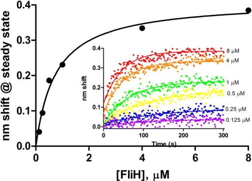 Steady state analysis of FliH binding to full length wild-type FlhB.Association phases from which steady state amplitudes were determined are shown in the inset. FliH concentrations ranged from 0.125 to 8 μM.