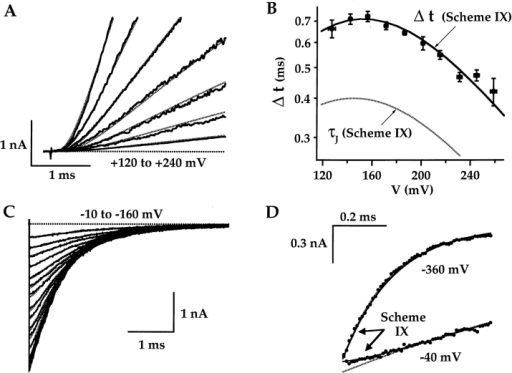 Allosteric model: voltage dependence of IK kinetics. (A) The initial time course of IK activation at different voltages (from Fig. 3 B, 5°C) are fit by Fig. 9 (Table : Patch 1, ΔVh = +5.6 mV). (B) The average Δt–V relationship (from Fig. 3 D) is compared with the prediction of Fig. 9 for Δt (solid line) and the time constant of voltage-sensor movement τJ = 1/(α + β) (dashed line). (Table : average 5°C). (C) Fig. 9 (dashed lines; Table : Patch 1, ΔVh = +5.6 mV) predicts a delay in tail currents measured from 0 to −160 mV (from Fig. 4 C). (D) Tail currents and Fig. 9 predictions (solid line) at −40 and −360 mV show initial deviation from an exponential fit (dashed lines, from Fig. 4C and Fig. D) at −40 mV, but not at −360 mV. Thus, a tail current delay is observed, but not at very negative voltages.