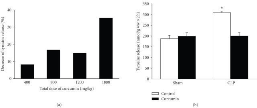Curcumin inhibits sepsis-induced muscle proteolysis. (a) Rats were treated with different doses of curcumin and the inhibition of muscle protein breakdown in septic rats was calculated as percent inhibition of tyrosine release from muscles of curcumin-treated septic rats compared with tyrosine release from muscles of vehicle-treated septic rats. Results are from experiments in which 8 septic rats treated with vehicle and 8 septic rats treated with curcumin were studied for each total dose of curcuminindicated in the figure. (b) Sham-operated and septic rats were treated with vehicle (control) or curcumin (total dose 1800 mg/kg divided into three equal doses administered intraperitoneally 1 hour before and 8 and 15 hours after sham-operation or CLP). Protein breakdown rates were determined in incubated extensor digitorum longus muscles 16 hours after sham-operation or CLP by measuring net release of tyrosine. Results are means ± SEM with n = 8 in each group. *P < .05 versus all other groups by ANOVA.