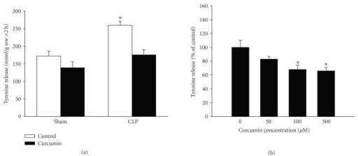 "Treatment of incubated muscles in vitro with curcumin reduces sepsis-induced increase in protein breakdown. (a) Extensor digitorum longus muscles were harvested from rats 16 hours after sham-operation or CLP and incubated for 2 hours in the absence or presence of curcumin (100 μM) dissolved in 0.1% DMSO. Protein breakdown rates were measured as net release of tyrosine as described in Section 2. Results are means ± SEM with n = 8 in each group. *P < .05 versus all other groups by ANOVA. (b) Incubated muscles from septic rats (16 hours after CLP) were treated with different concentrations of curcumin for 2 hours followed by measurement of tyrosine release. Results are means ± SEM with n = 8  in each group except for ""0 curcumin"" which was pooled from 3 paired experiments (0 versus 50, 0 versus 100, and 0 versus 500 μM). Results are expressed as % of control."