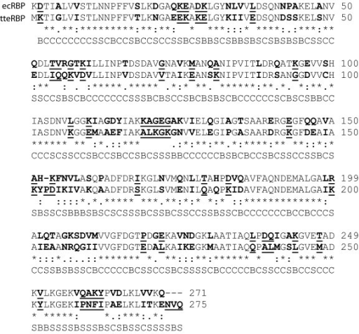 Amino acid sequence comparison of tteRBP and ecRBP. Clustal-W amino acid sequence alignment of tteRBP and ecRBP. Amino acids which are not conserved are in bold type and underlined, amino acids that are conserved but not identical are in bold type (charge inversions are scored as non-conservative here). Core, boundary or surface classification of amino acids is shown below the aligned residues.