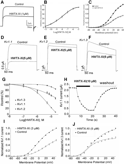 Effects of HWTX-XI on Kv channels.(A) 1 µM HWTX-XI evidently reduced the control potassium currents amplitude in rat DRG neurons by 41.7±1.8% (n = 5). (B) Concentration-response relationship for HWTX-XI inhibition of potassium currents expressed on rat DRG neurons. Each data point (mean±S.E.) arises from 5–7 cells. The solid line through the data is a fit of I/Imax = 1/[1+exp(C–IC50)/Κ]. (C) Effect of HWTX-XI on steady-state current-voltage relationship of potassium channels on rat DRG neurons. DRG cells were held at −80 mV and stepped to test potentials of −80 to +60 mV (mean±SD, n = 4). (D–F) 1 µM HWTX-XI evidently reduced the control potassium currents (Kv1.1, D; Kv1.2, E; Kv1.3, F) amplitude in rat DRG neurons by 41.7±1.8% (n = 5). (G) Concentration-response relationship for HWTX-XI inhibition of potassium currents expressed on rat DRG neurons. Each data point (mean±S.E.) arises from 5–7 cells. The solid line through the data is a fit of I/Imax = 1/[1+exp(C−IC50)/Κ]. (H) At a concentration of 10 µM, HWTX-XI produced a rapid (τ≈12±2 s for steady-state inhibition, n = 5) inhibition which is readily reversible with the time constant of 21±3 s upon removal of the toxin. (I–J) The current-voltage curves of Kv1.1 (I) and Kv1.3(J) currents activated by 3 µM and 5 µM HWTX-XI respectively.