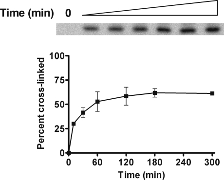 Time course of γ-HOPdG cross-linking to EcoRI. γ-HOPdG-modified 32P-end-labeled DNA substrate (160 pM) was incubated with EcoRI (1.6 nM) for up to 5 h at room temperature in the presence of 50 mM NaCNBH3, and then, a second reducing agent, NaBH4 (100 mM), was added to rapidly quench any remaining aldehydic substrate at specific time points. A representative autoradiogram from three independent experiments is presented, which displays the accumulation of the DNA−protein cross-linked band. Percent cross-linking is shown in the graph just below the gel expansion. The values are the means ± standard deviations from three independent experiments.