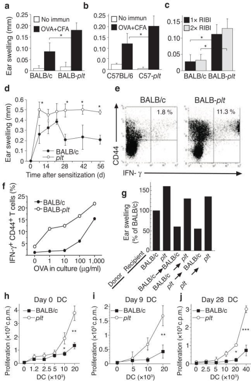 Increased immune responses in plt mice. (a–c) DTH responses in plt mice. WT and plt mice were sensitized with OVA/CFA (a,b) or OVA/RIBI x1 or x2 (c). Responses were elicited after 7 days and ear swelling measured at 24 h. (d) Time course of contact hypersensitivity (CHS) responses. BALB/c and plt mice were sensitized by oxazolone skin painting and ear swelling measured 24 h after elicitation. Data points represent mean ± SD for 5 mice (a–d). (e) IFN-γ intracellular staining of BALB/c and plt lymph node CD4+ T cells 9 days after immunization with OVA/CFA. Numbers indicate percentage of CD44+IFN-γ+ cells among CD4+ T cells. (f) Percentage of CD44+IFN-γ+ cells among CD4+ T cells after restimulation with increasing concentrations of OVA. (g) DTH responses, performed as above, after reciprocal bone marrow transplantation between BALB/c and BALB/c-plt mice. Bars represent mean ear swelling as a percentage of the responses in BALB/c mice. n = 5 mice/group, P<0.02 for BALB/c vs. plt recipients. (h) Allogeneic T cell proliferation induced by lymph node CD11c+ cells from untreated mice. (i,j) OVA-specific proliferation of a DO11.10 CD4 T cell line induced by total lymph node DCs 9 days (i) or 28 days (j) after immunization with OVA/CFA. Points represent mean ± SD for 3 mice (h j). * P < 0.05; ** P < 0.005; *** P < 0.0005 by Student's t-test.