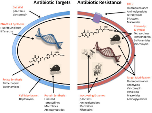 a research on microbial resistance to antibiotics Researchers reverse bacterial resistance to  in research published in the open  may 6) researchers reverse bacterial resistance to antibiotics in.