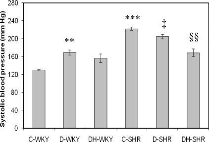 Effect of honey on systolic blood pressure in streptozotocin-induced diabetic WKY and SHR. Each group consisted of five to seven animals. Data are expressed as mean ± SEM. WKY, Wistar-Kyoto rats; SHR, spontaneously hypertensive rats; C-WKY, control WKY; C-SHR, control SHR; D-WKY, diabetic WKY; D-SHR, diabetic SHR; DH-WKY, diabetic WKY + honey; DH-SHR, diabetic SHR + honey. ** p < 0.01, ***p < 0.001 versus C-WKY; ‡p < 0.05 versus C-SHR; §§p < 0.01 versus D-SHR.