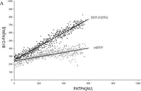 FACS analysis of fluorescent fatty acid uptake of transiently transfected HuH7 cells. Thespreadsheets correlated the level of expression with the amount of fluorescent fatty acid uptake (B12-FA). (A) HuH7 cells transfected with RFP-FATP4.Control cells were transfected with red fluorescent mRFP protein. RFP-FATP4 (r=0.73) enhanced fatty acid uptake depending on its relative level of expression in comparison to control cells only expressing mRFP (r=0.4). The low increase of the fatty acid uptake of control cells (r=0.4) could be explained by endogenous FATP4 expression in HuH7 cells. FATP2-HA (B) (r=0.92) and ACSL1-FLAG (C) (r=0.64) overexpressing cells enhanced the uptake of fatty acids as well. The overexpression of CD36-FLAG (D) (r=0.2) did not significantly correlate with the uptake of fatty acids. Control cells were transfected with pcDNA3 (E) (r=0.18). The pictured diagrams are representative for three independent experiments.