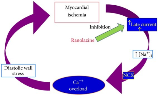 Mechanism of action of ranolazine. The pharmacologically induced reduction of the late sodium current ameliorates the myocardial diastolic relaxation by reducing the diastolic wall stress. This finally produces an improvement of segmental myocardial ischemia.
