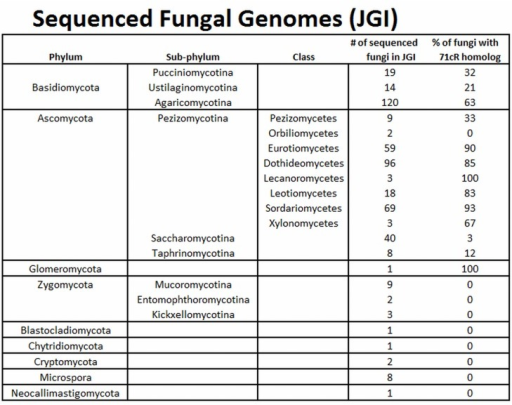 Distribution of 71cR orthologs among sequenced fungal species.For each genome sequence available in the JGI MycoCosm portal, tblastn was used to search the filtered model transcripts for 71cR orthologs. To the right of each taxon, the number of analyzed genome sequences is shown, along with the percent of genomes in the taxon for which a 71cR ortholog was identified.