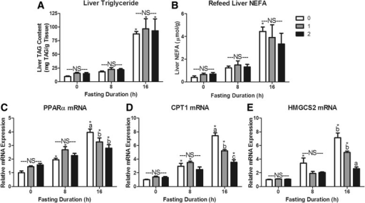 Hepatic lipid storage and metabolism responses to re-feeding after a fast. Liver a Triacylglycerol (TAG) content, b Non-Esterified Fatty Acid (NEFA) content, c Peroxisome proliferator-activated receptor alpha (PPARα) mRNA expression, d Carnitine palmitoyl transferase I (CPT1) mRNA expression, and e Hydroxymethylglutaryl Coenzyme A Synthase 2 (HMGCS2) mRNA expression. *Denotes a significant difference from 0 h fasting within re-feeding duration (P < 0.05). a,b,cBars that do not share a common letter differ significantly within fasting duration (P < 0.05; n = 3–6). NS, no significant differences within a fasting duration (P > 0.05)